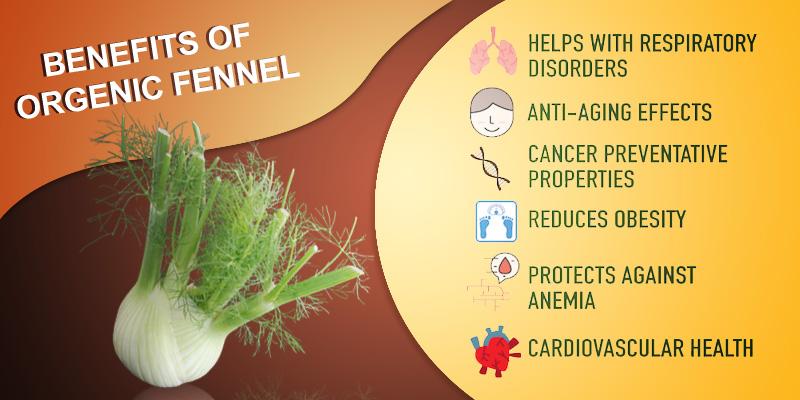 Benefits of Organic fennel in your diet