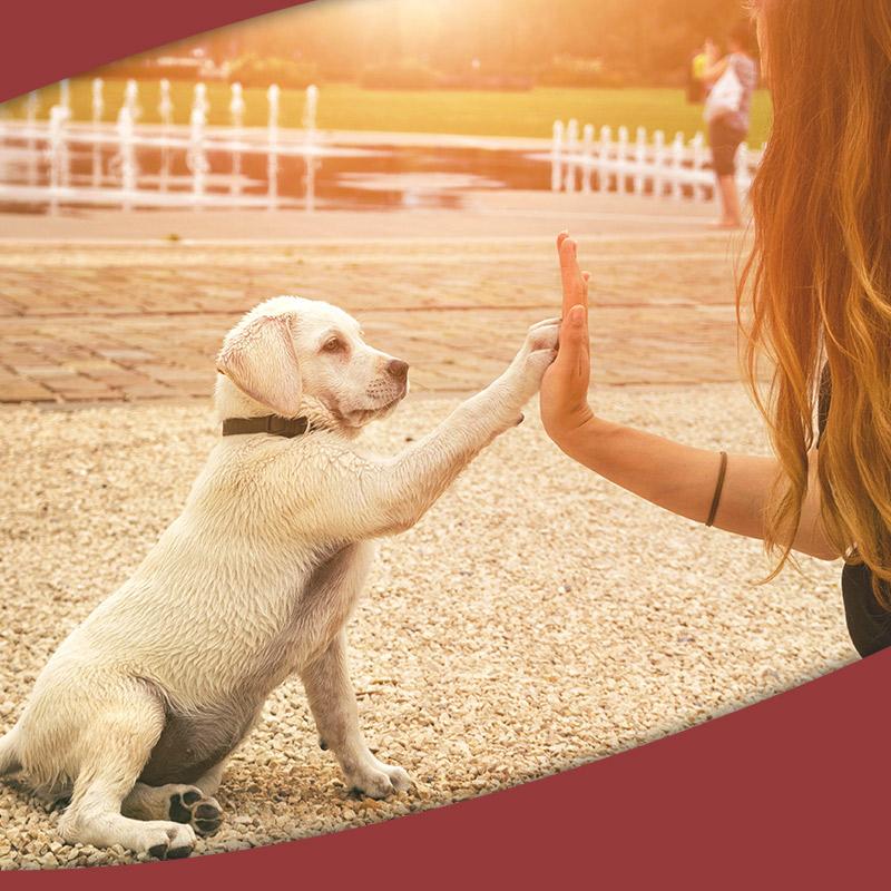 Healthy dog with barkumin
