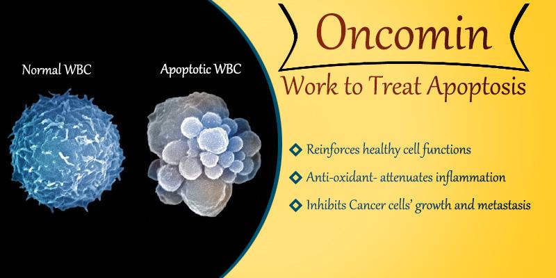 Oncomin works to treat apoptosis naturally