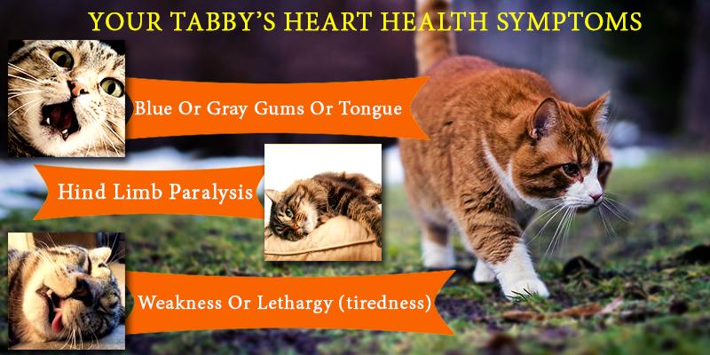 Tabbycin-C for keeping cats healthy