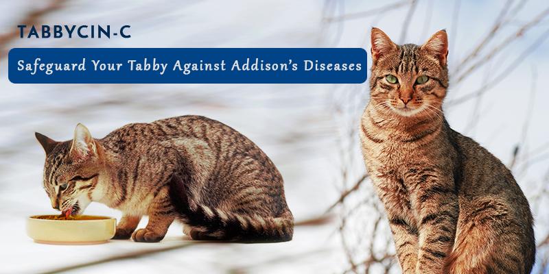 Tabbycin –C best cat supplements