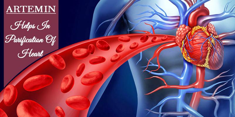 Artemin for healthy heart