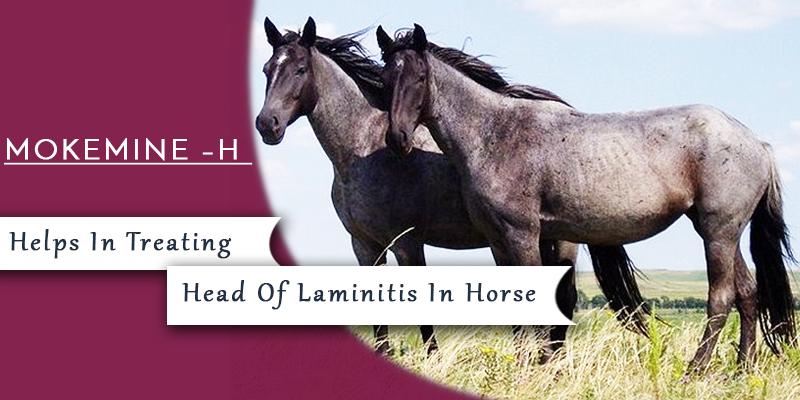 Mokemin-H for Laminitis in horses